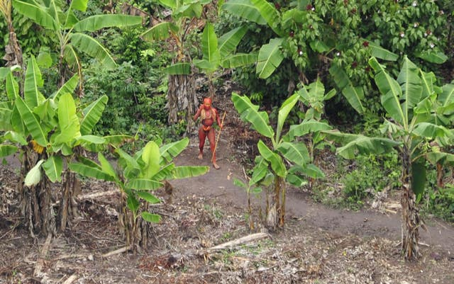 Uncontacted Indians living in Brazil, near the Peruvian border, who were featured in BBC1's Human Planet (PA)