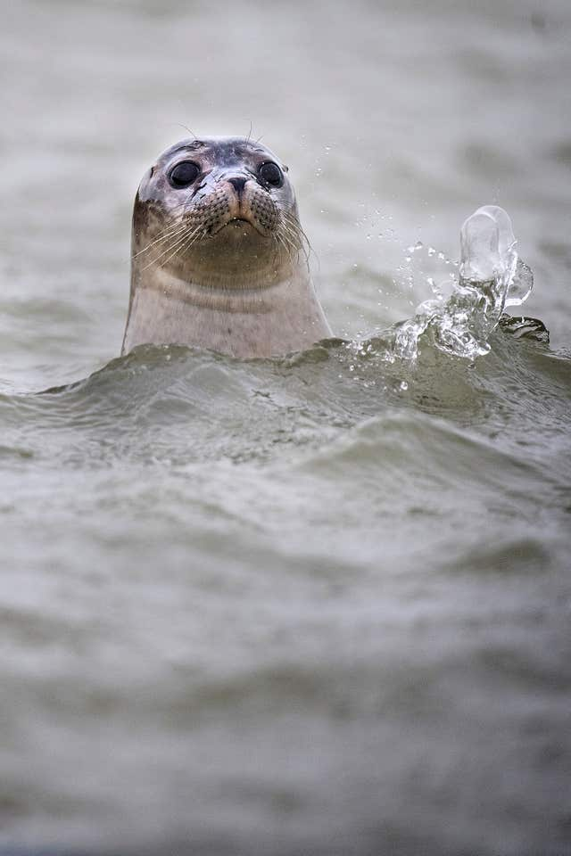 ZSL seal survey 2017