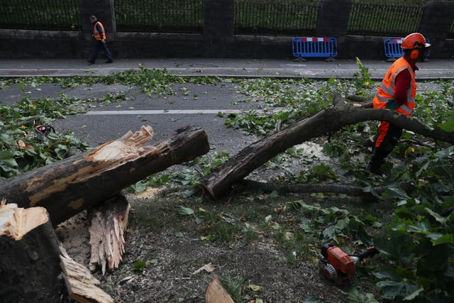 Downed trees in Dublin