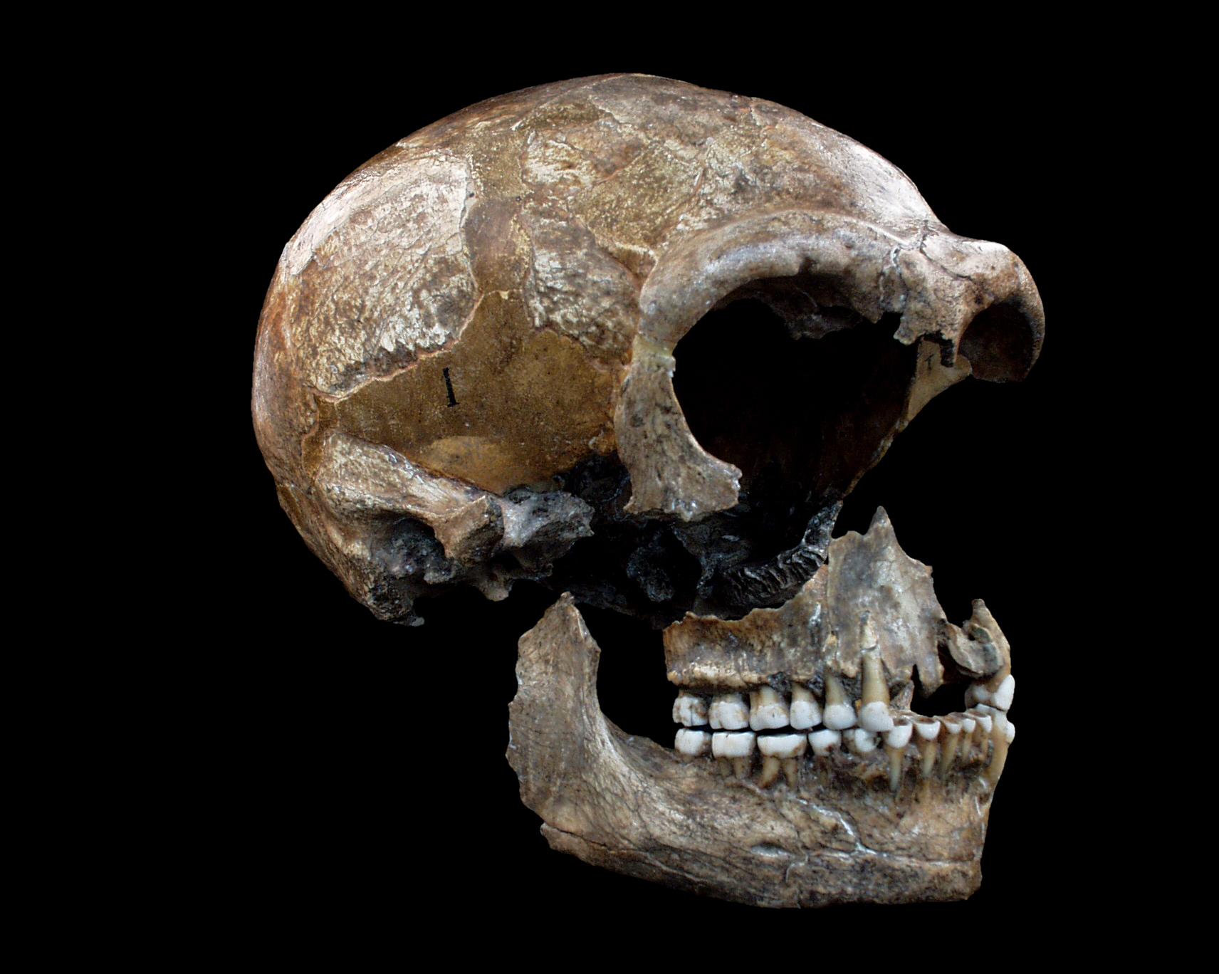 Neanderthals Could Be the World's Oldest Artists