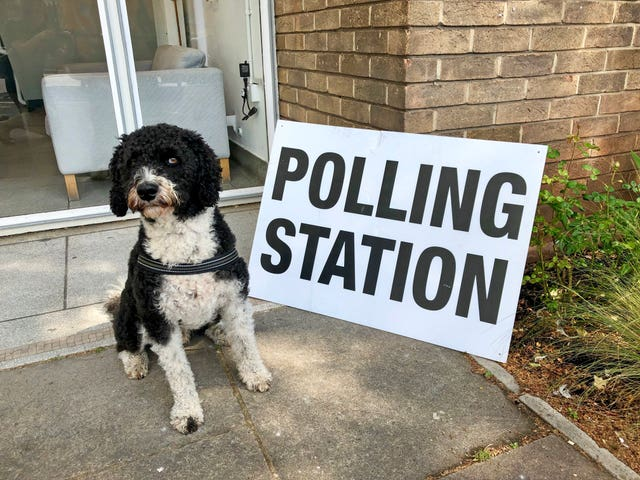Henry the labradoodle outside the polling station at Spike Island in Bristol
