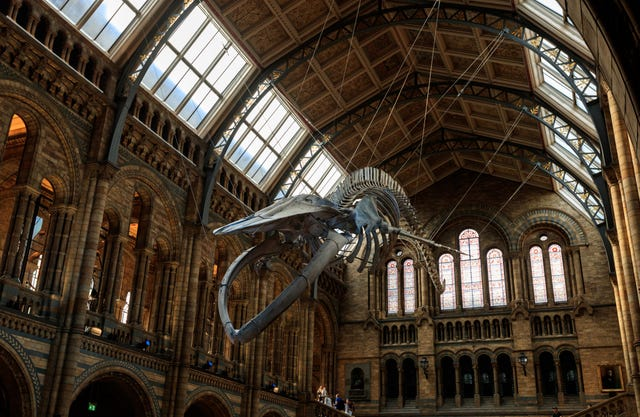 Natural History Museum stock – London