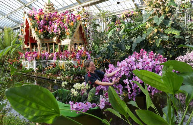 In Pictures Finishing Touches Made To Orchids Festival At Kew Gardens Bt
