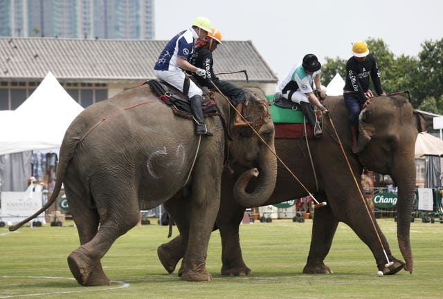 Polo players behind mahouts sit astride each elephants as they vie for the ball (Sakchai Lalit/AP)
