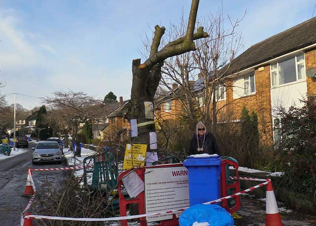 Tree felling in Sheffield