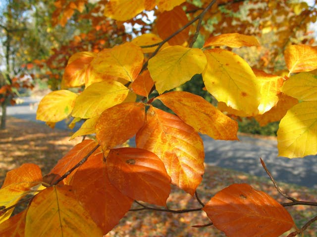 Beech leaves are ideal. (Thinkstock/PA)