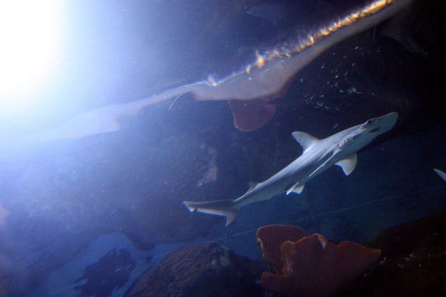 New sharks at Chessington World of Adventures