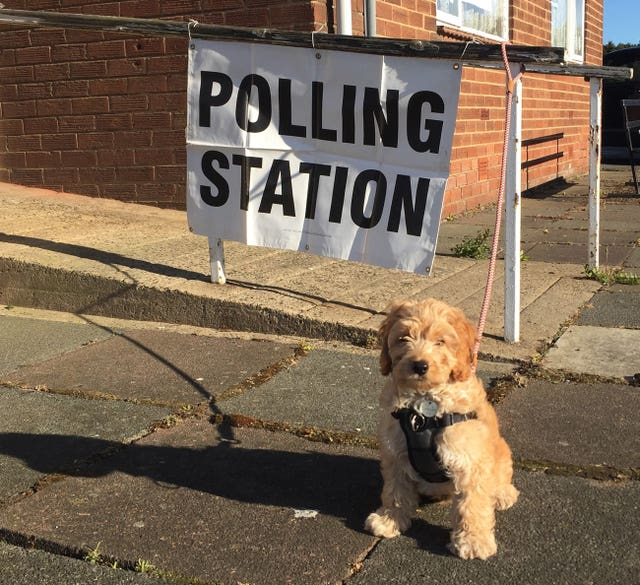 Reggie, a three-month-old cockerpoo puppy, outside a polling station in Chester-le-Street