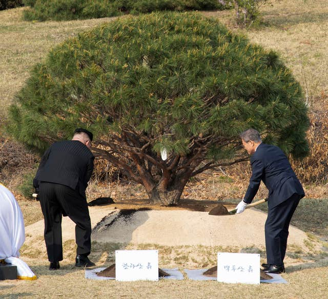 They planted a pine tree together near the military demarcation line at the border village of Panmunjom (Korea Summit Press Pool via AP)