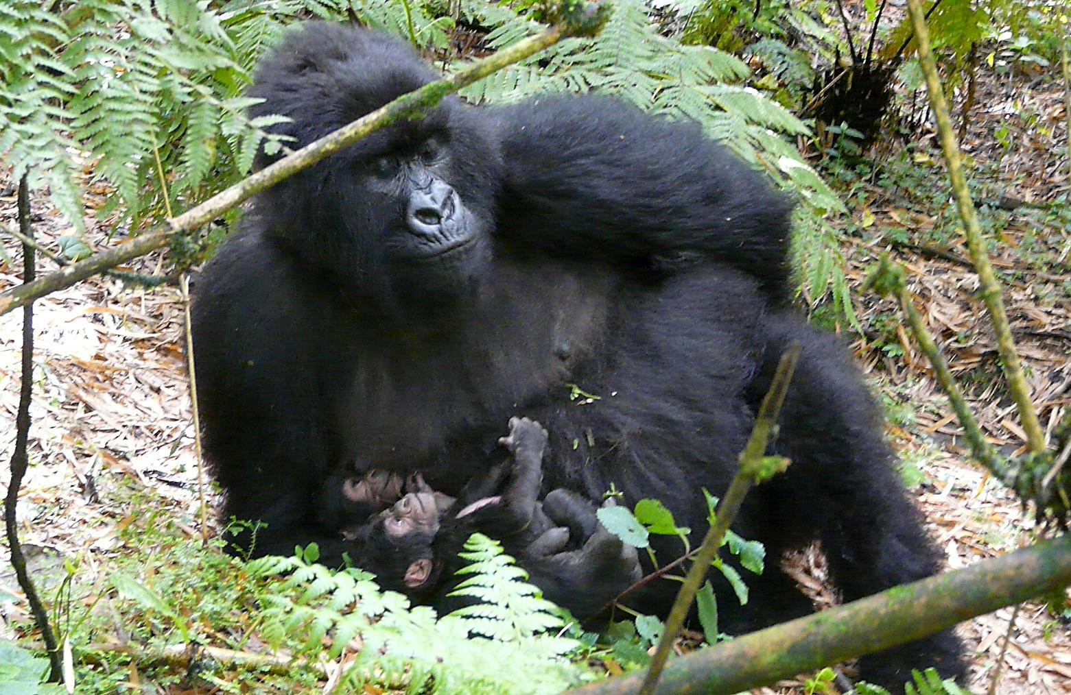 Foreign tourists involved in Prospective kidnapping in Virunga National Park