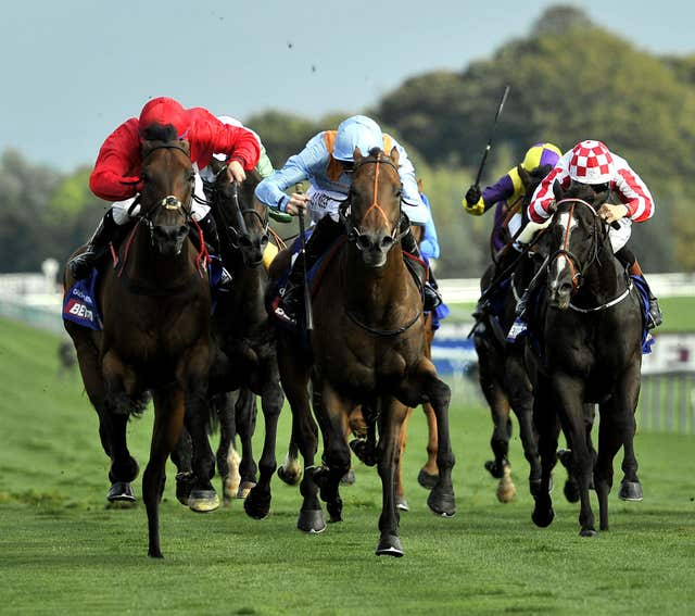 G Force (light blue) won the Haydock Sprint Cup in his younger days