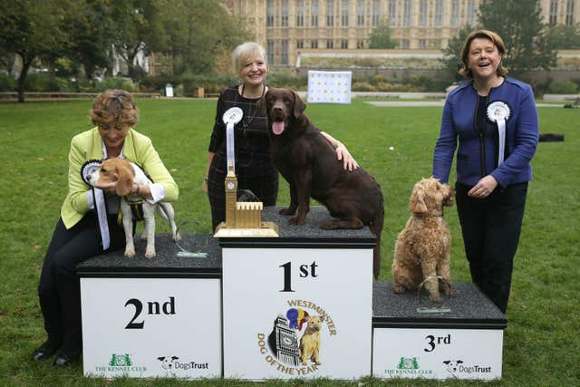 5th Westminster Dog of the Year competition