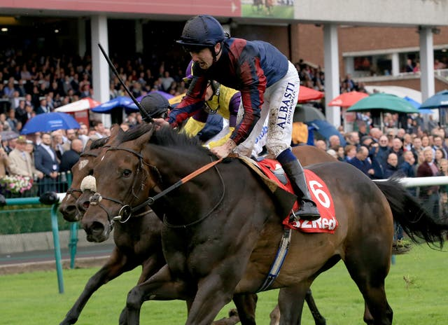 The Tin Man could bid for a second win in the Hackwood Stakes at Newbury on Saturday