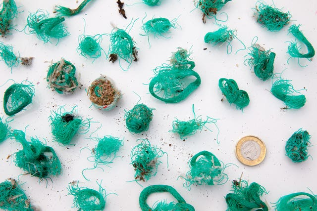 Bundles of green plastic fishing net and twine regurgitated by gulls