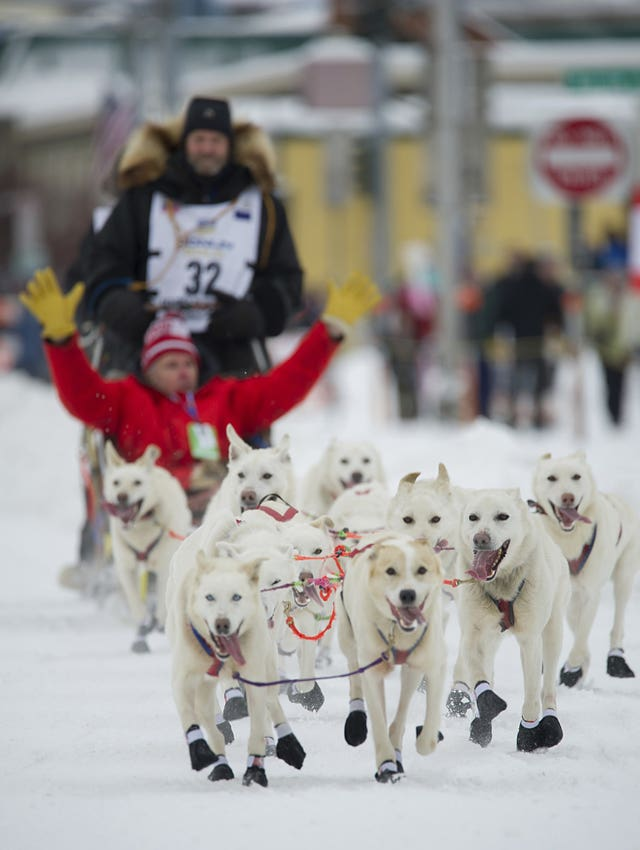 an overview of the idatarod a dog sled race across alaska Tomorrow being saturday, the recently-truncated early voting period down here in nc will end at 1:00 pm, which means the polls will be packed with rumpists.