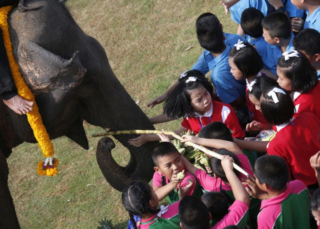 An elephant is fed by children before the match (Sakchai Lalit/AP)