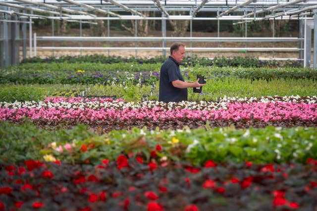 Nursery manager Mike Jones inspects some Dusky Cranesbill geraniums (Victoria Jones/PA)