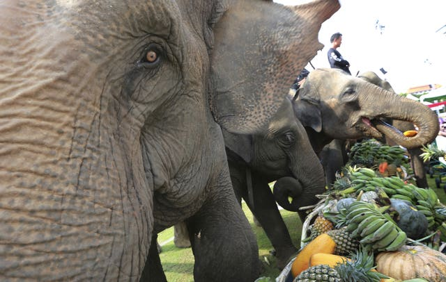 Elephants tuck in ahead of the game (Sakchai Lalit/AP)