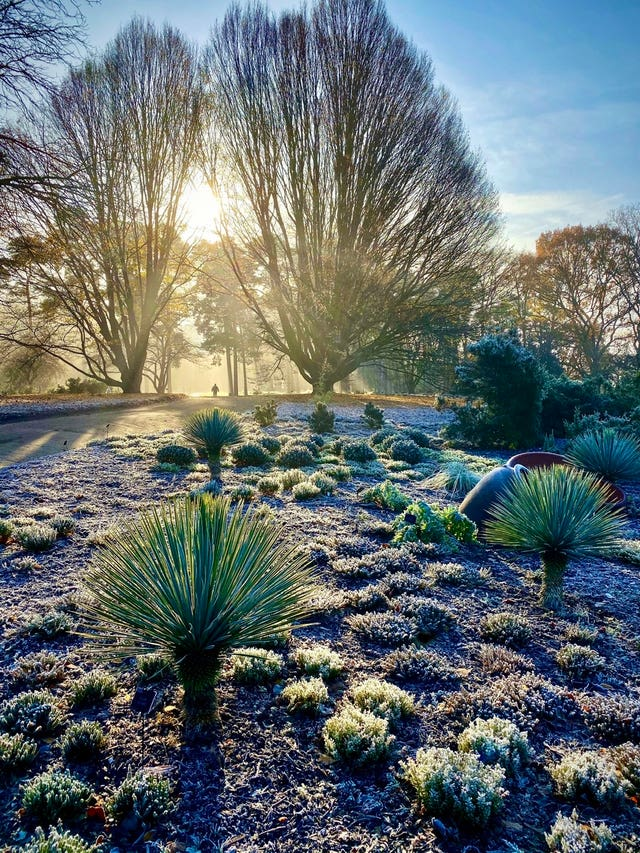 A Winter's day at Wisley by Richard Turner, which has come first in the Celebrating Gardens category