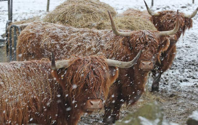 Highland cattle in Durham during a snow blizzard as freezing weather grips the UK (Owen Humphreys/PA)
