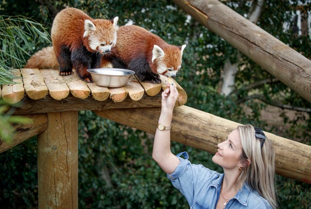 Yorkshire Wildlife Park expanded animal reserves