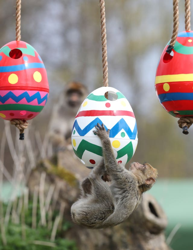 Easter at Blair Drummond Safari Park