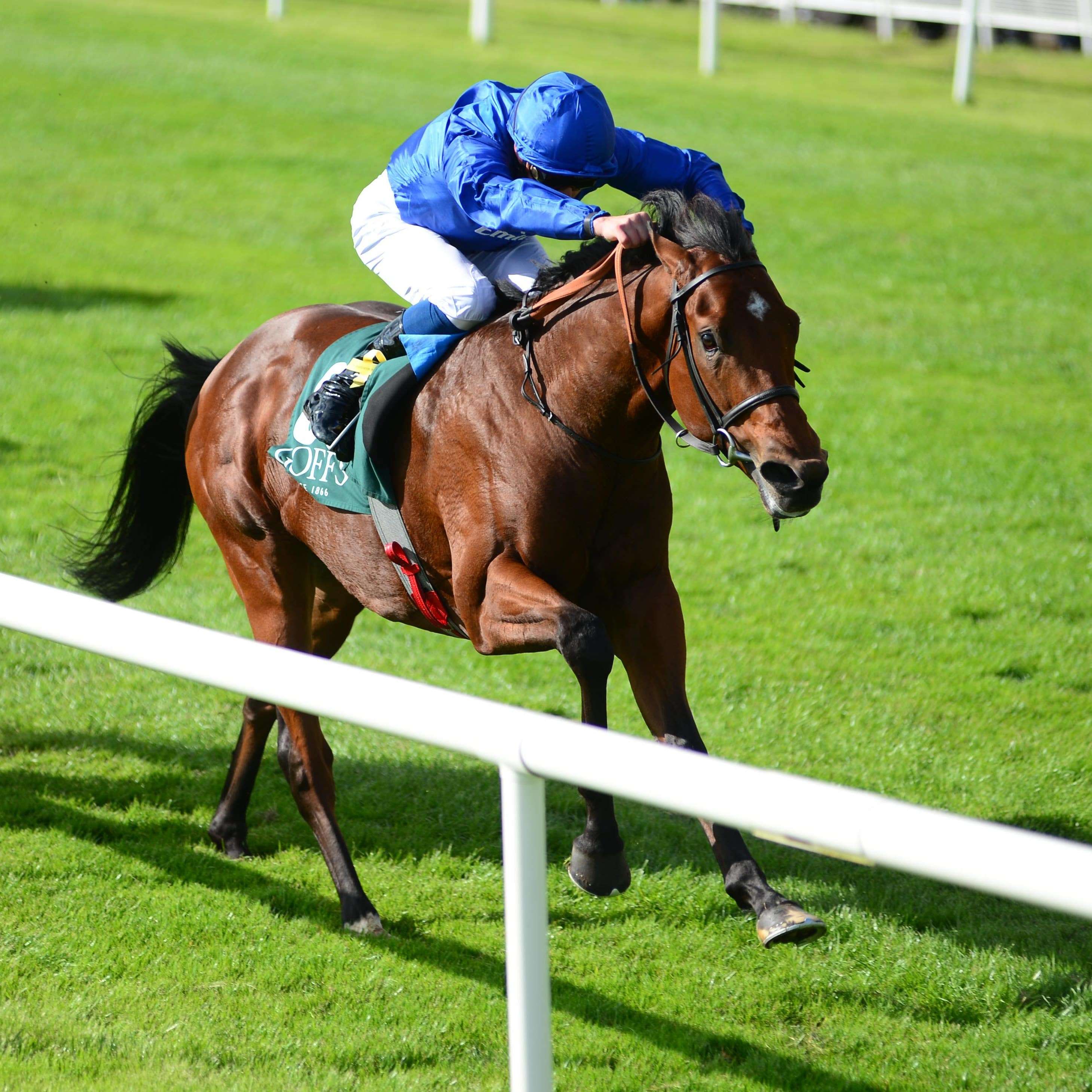 Quorto has been ruled out of the 2000 Guineas