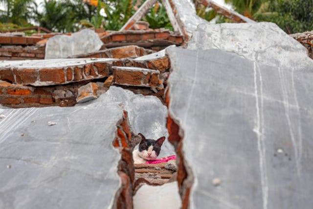 A cat is seen through the rubble of a house badly badly damaged by an earthquake in Mamuju