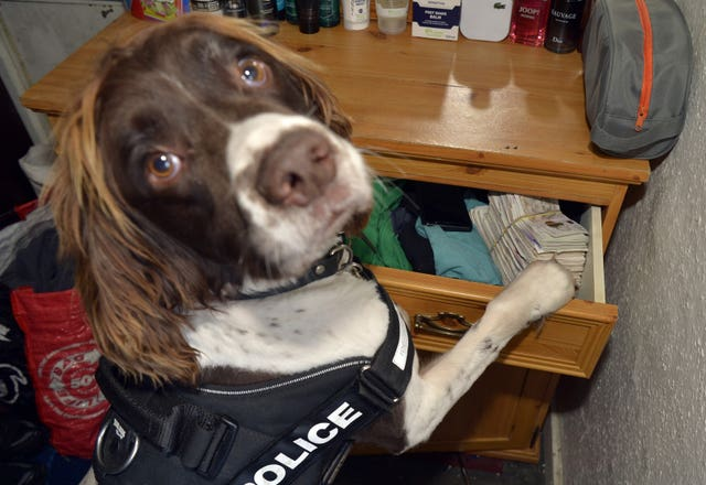 Specialist drug detection dogs have been introduced by British Transport Police