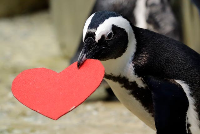 San Francisco Penguins Valentine