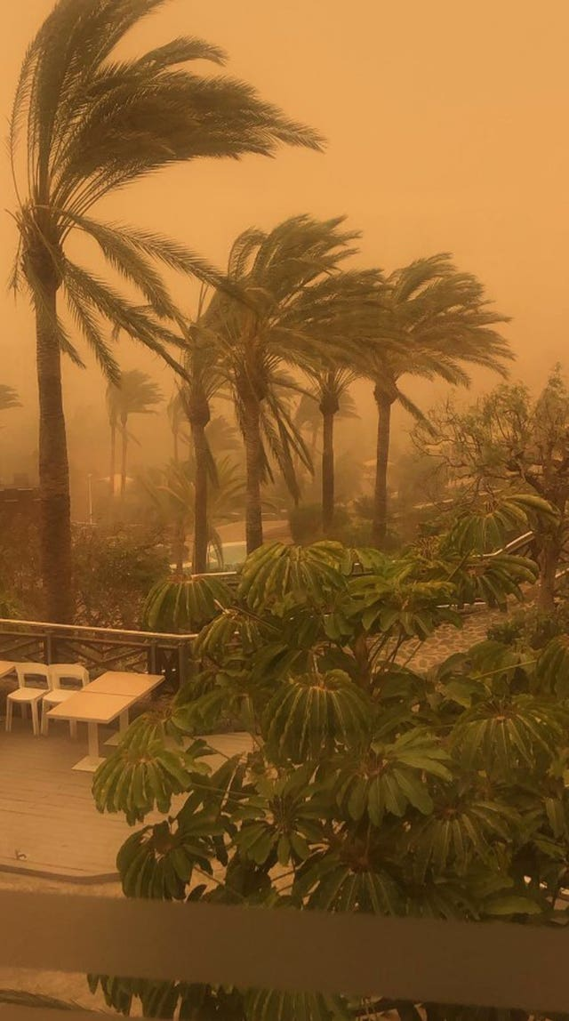 Trees blow during the sandstorm