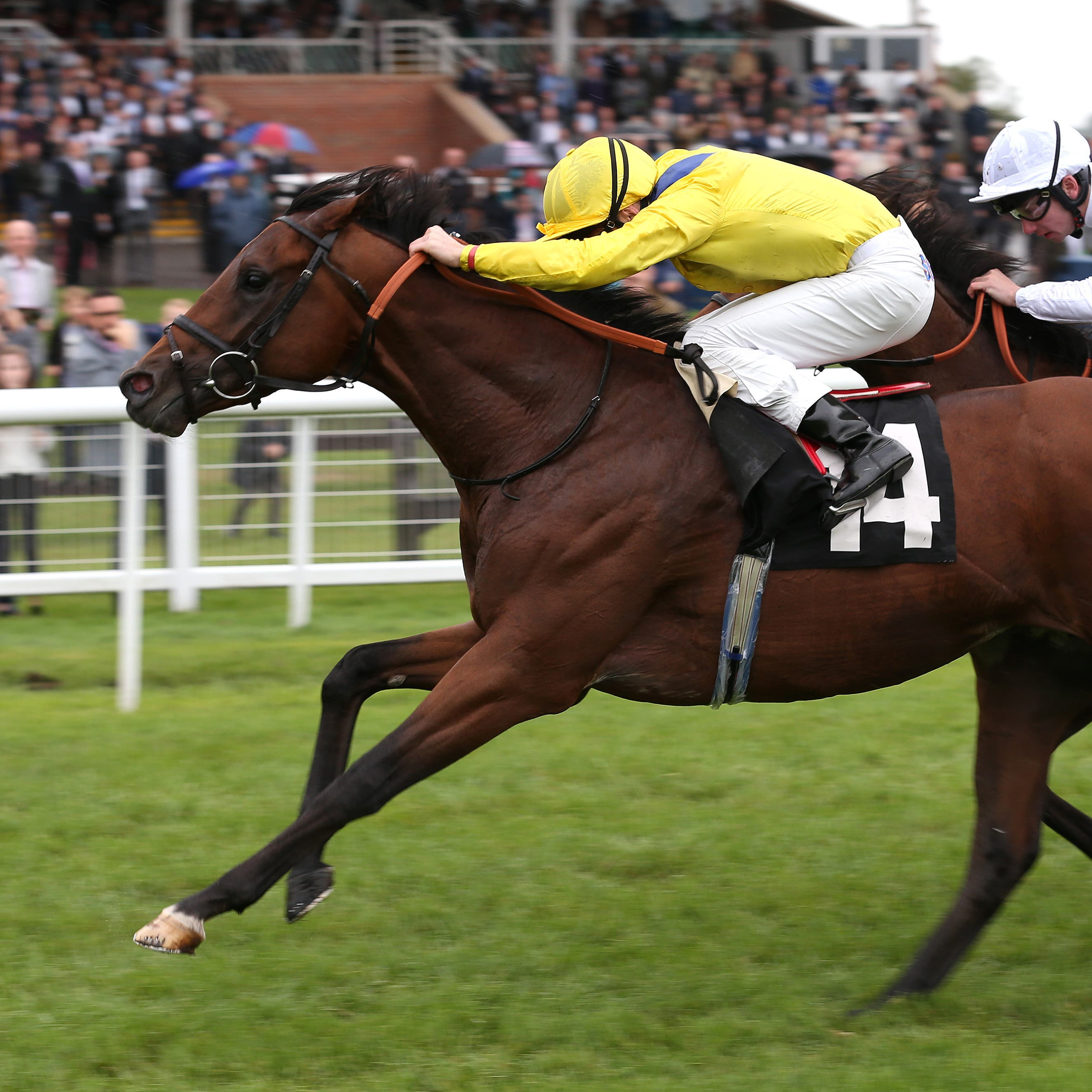 Politicise showed his real worth in winning at Newbury