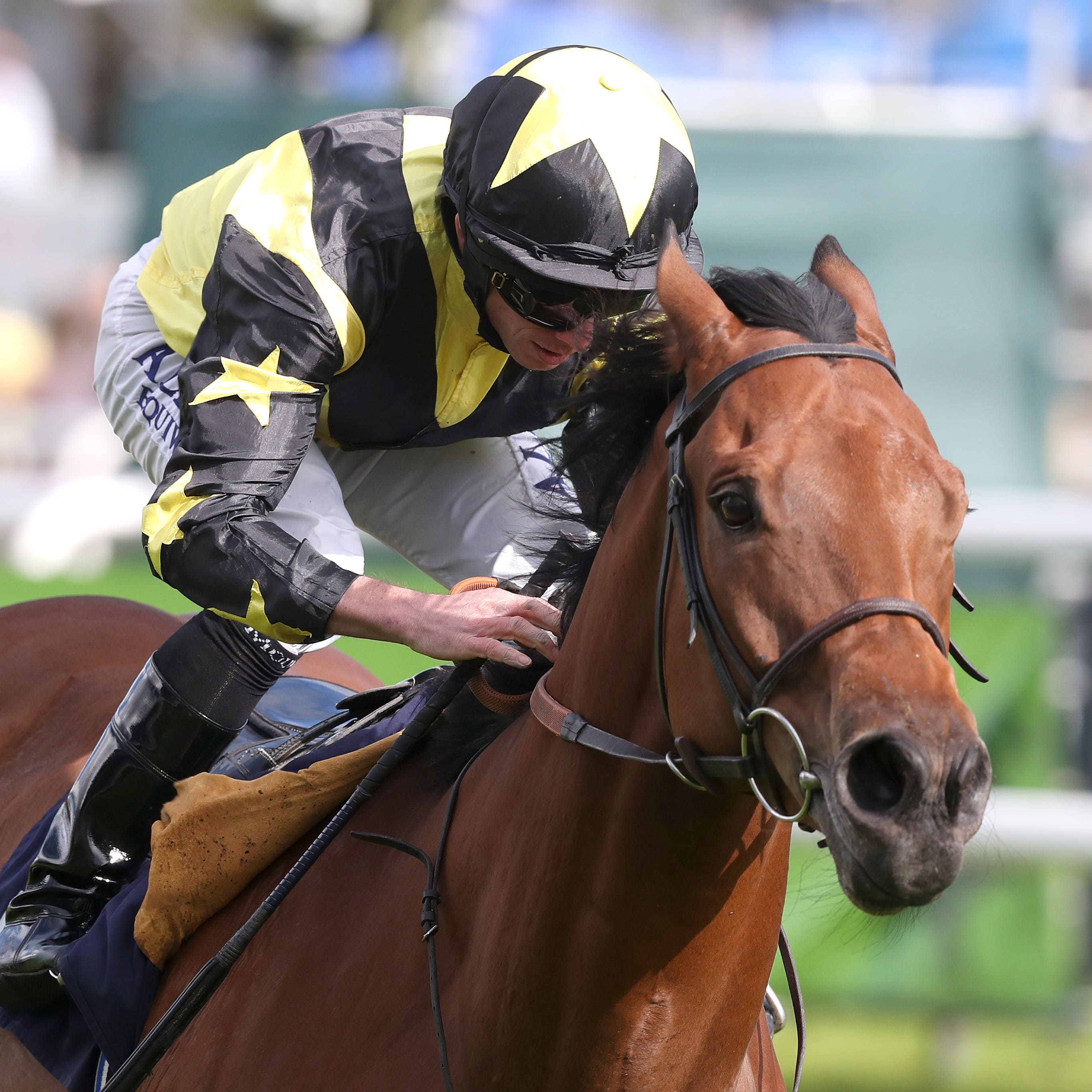 Encore D'Or on course for Dundalk venture
