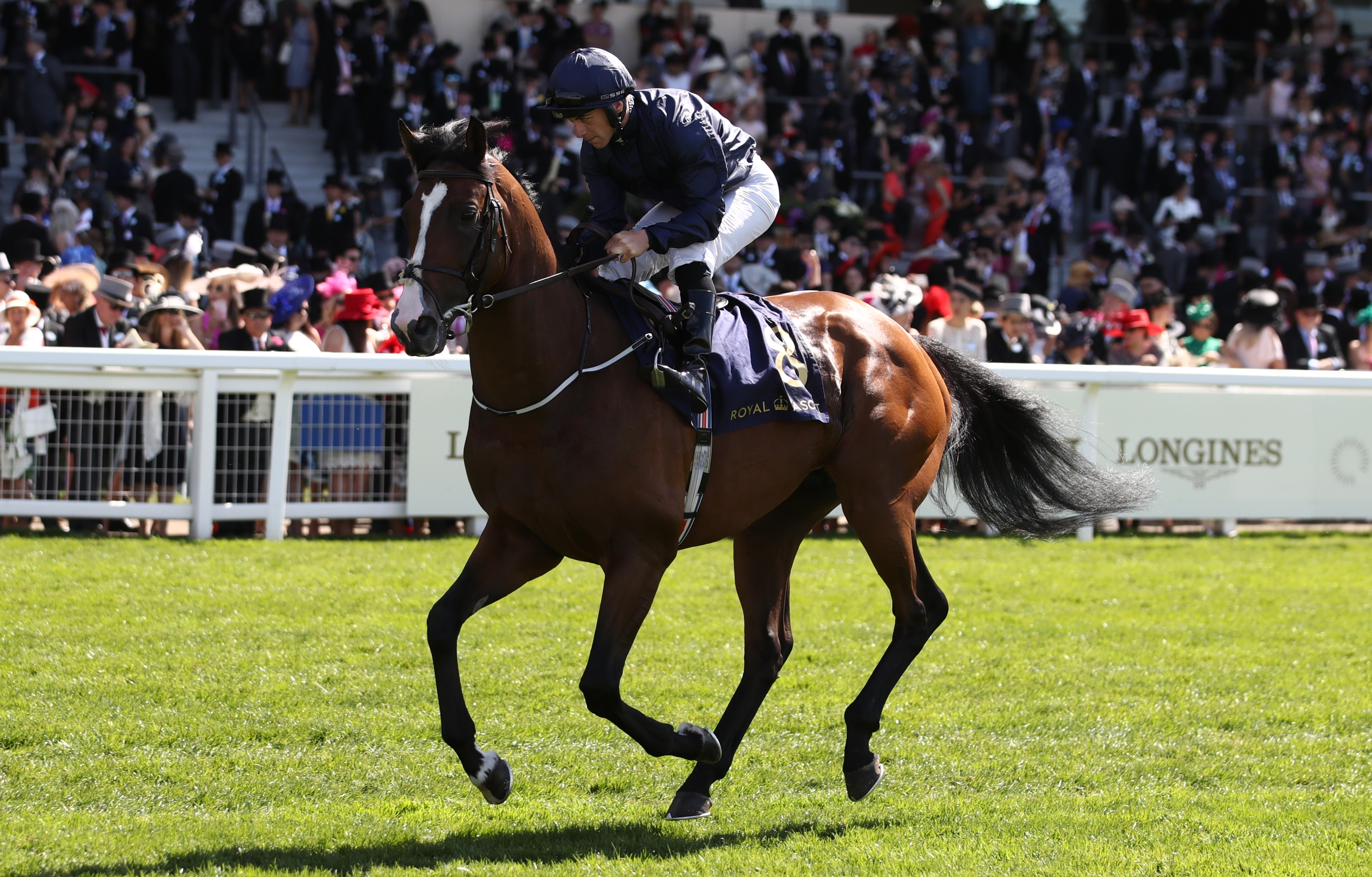 Image result for fleet review horse