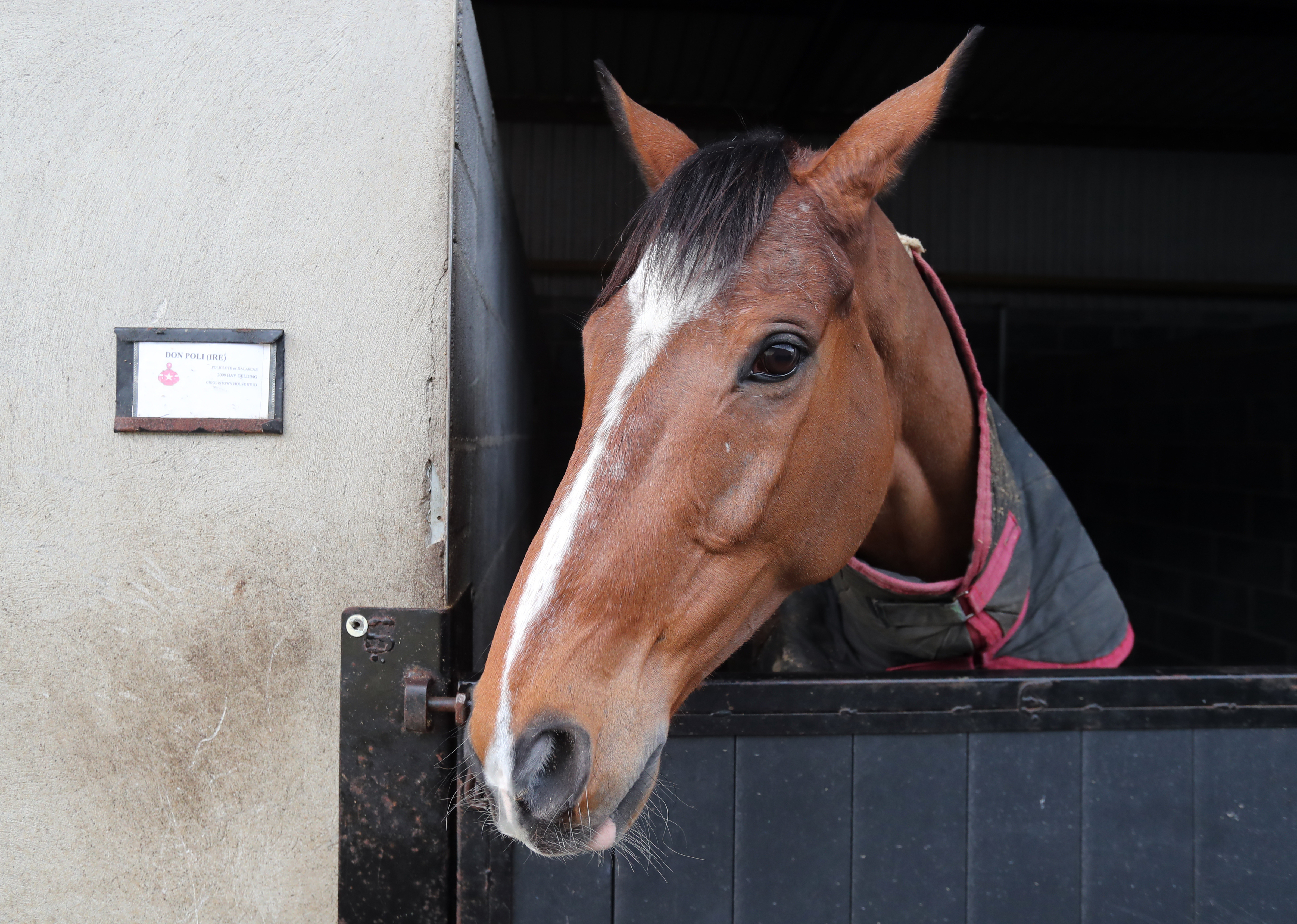 Don Poli is finally back in action at Aintree