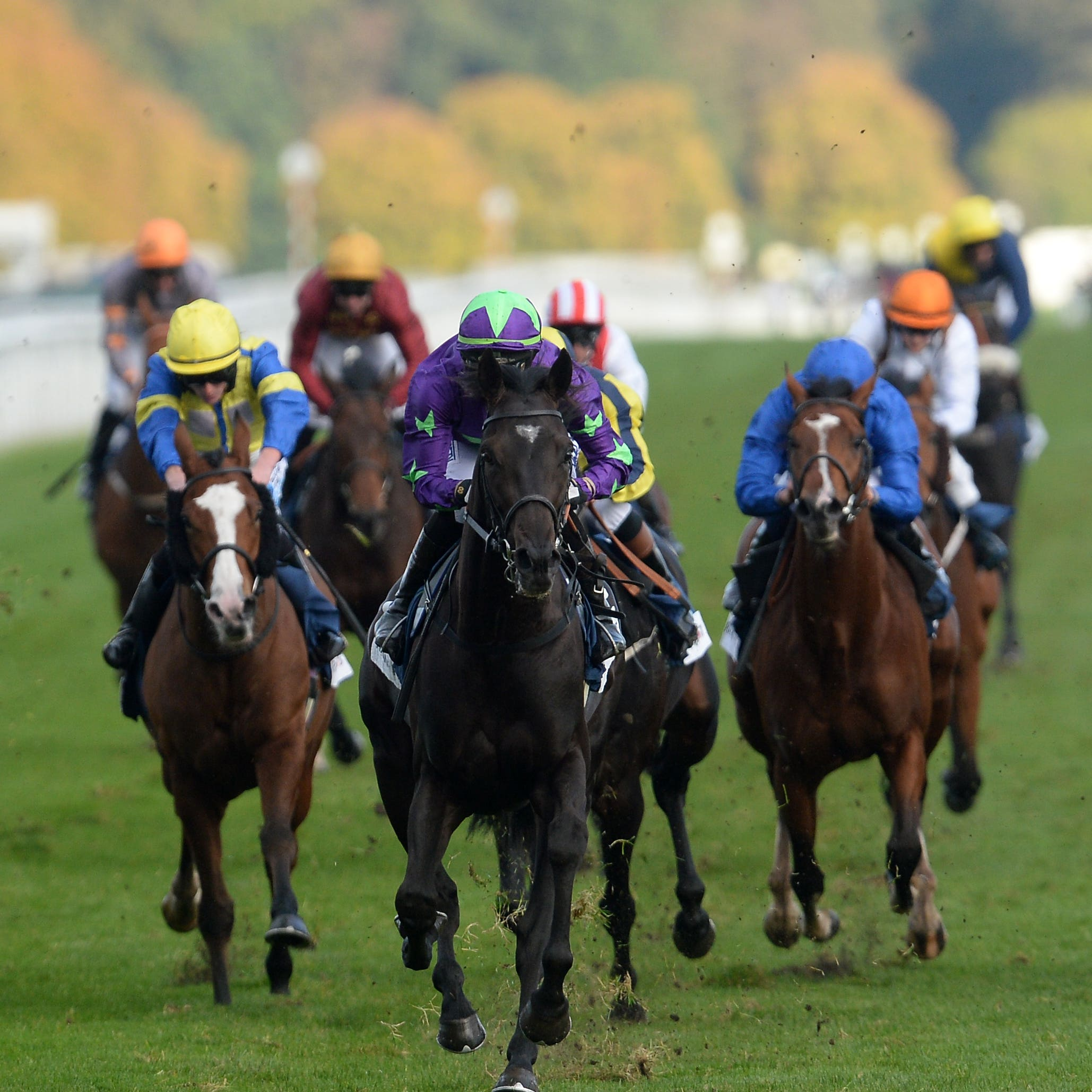 To Be Wild (centre) winning at Doncaster in 2016