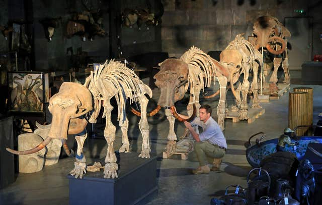 Rupert van der Werff, of Summers Place Auctions in Billingshurst, West Sussex, putting the final touches to a family of four mammoths. (Gareth Fuller/PA Wire)