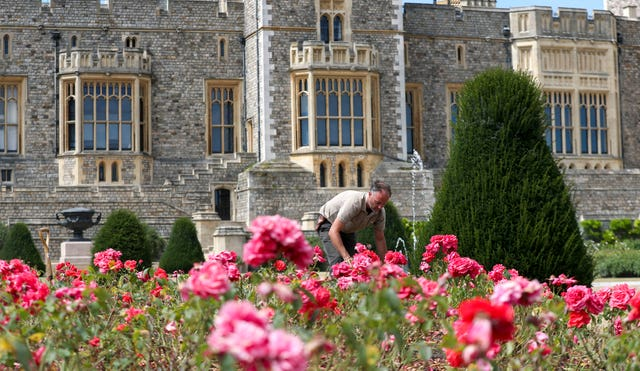 Windsor Castle's East Terrace Garden features thousands of rose bushes. Steve Parsons/PA Wire