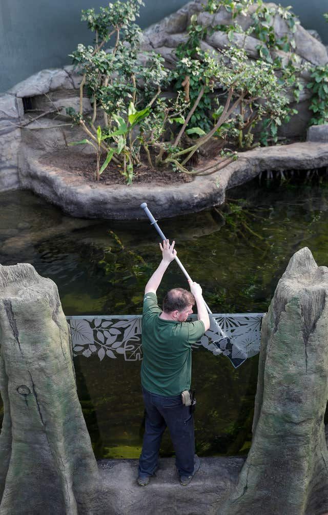 Ross Brown cleans the 70,000 litre aquarium in the Tropical House at Marwell Zoo in Hampshire (Andrew Matthews/PA)