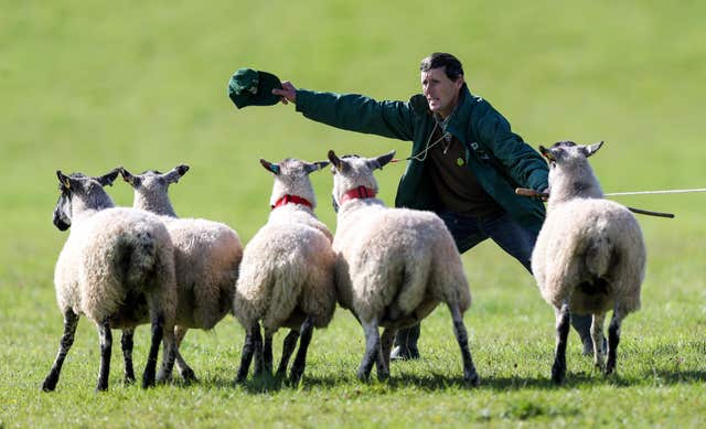 The International Sheep Dog Trials
