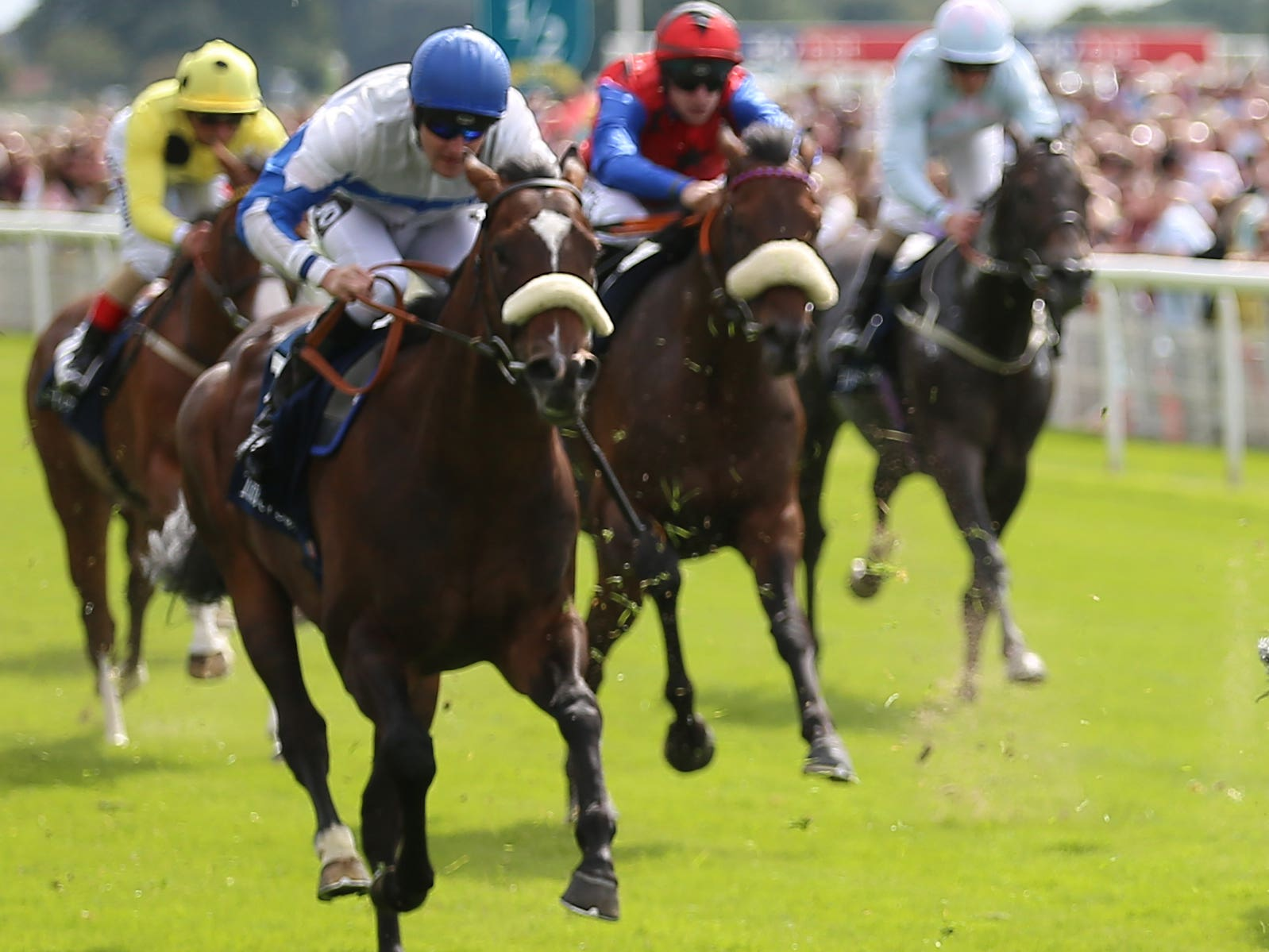 Plans are fluid for Ropey Guest (noseband)