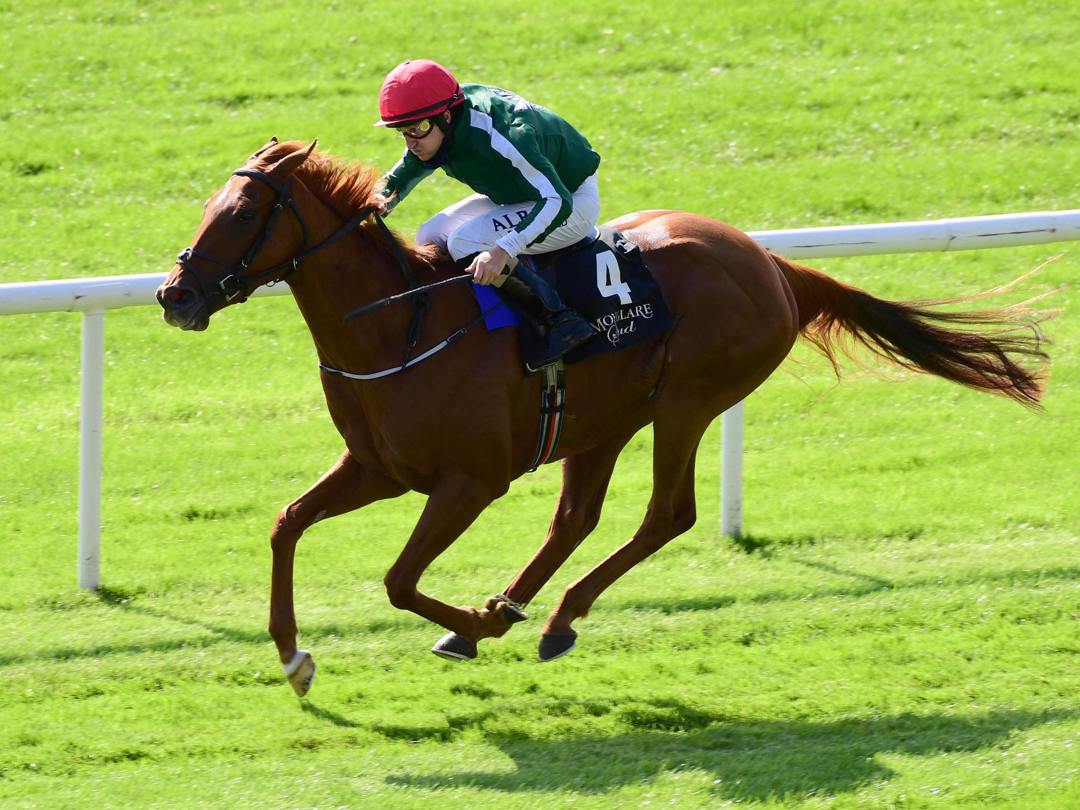 Cayenne Pepper will represent Jessica Harrington at the Breeders' Cup (PA)