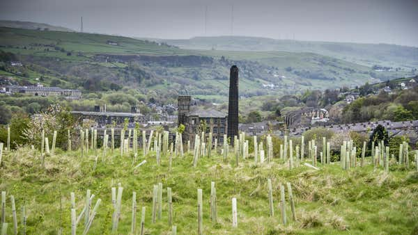 Government announces extra £3.9 million for tree planting projects