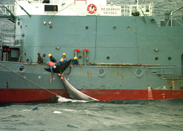 Whalers on the catcher ship 'Kyo Maru' in the Southern Ocean