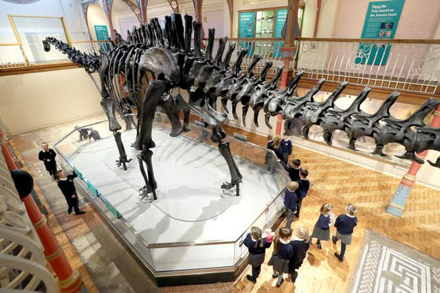 Children from Cheselbourne Village School take a look at the Natural History Museum's Diplodocus skeleton cast, known as Dippy, as it is installed at Dorset County Museum in Dorchester (Andrew Matthews/PA)
