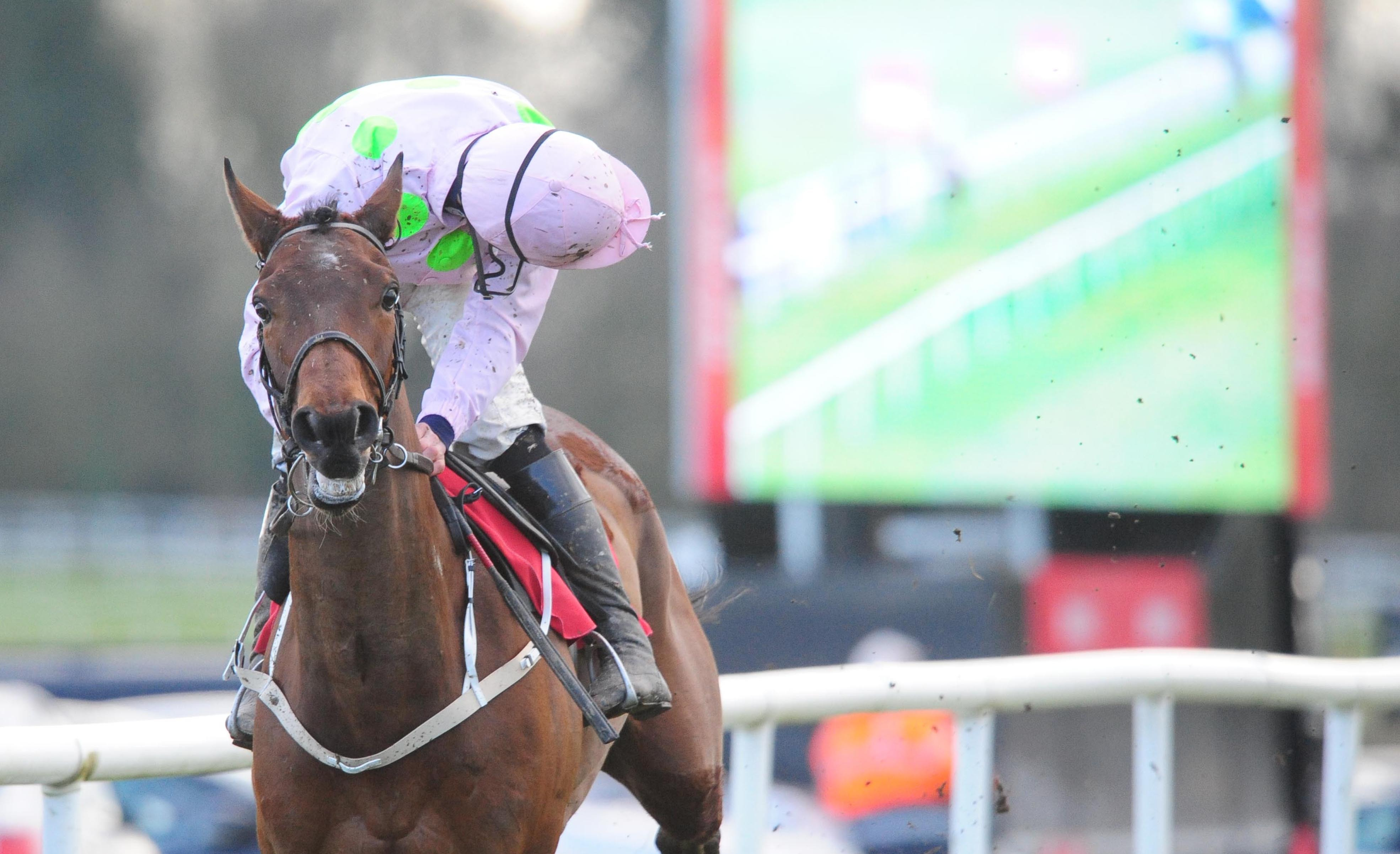 Saldier could be back in time for the Champion Hurdle at Cheltenham