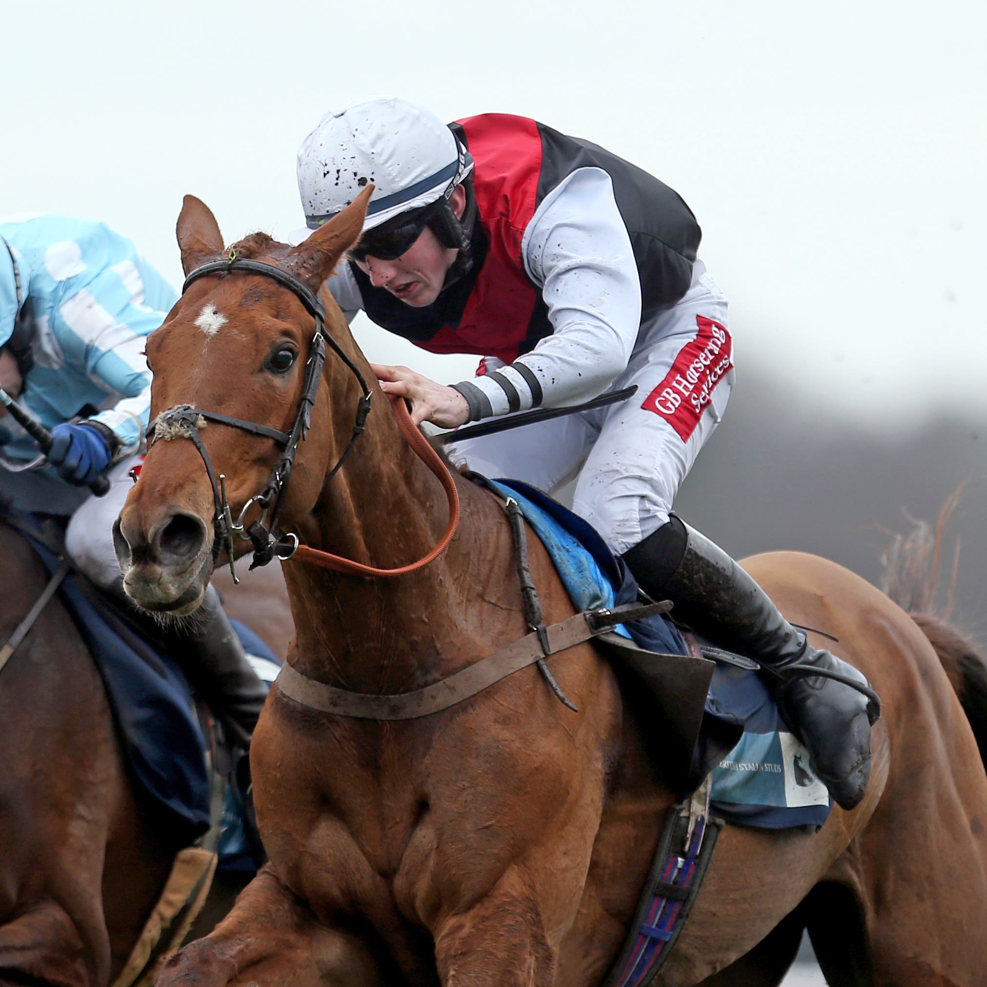 Queenohearts (right), who is likely to run at Fairyhouse on her next start