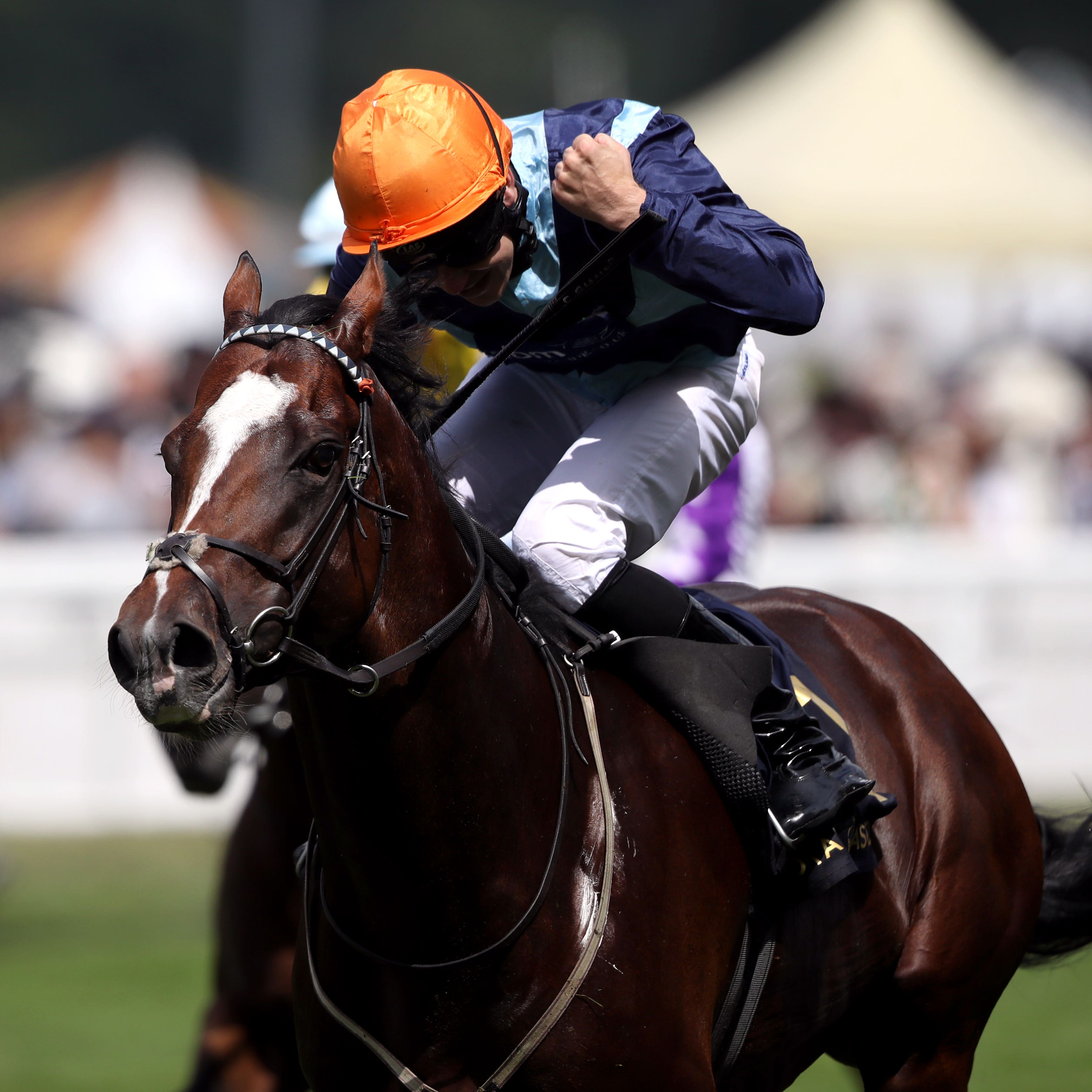Accidental Agent winning last year's Queen Anne Stakes at Royal Ascot