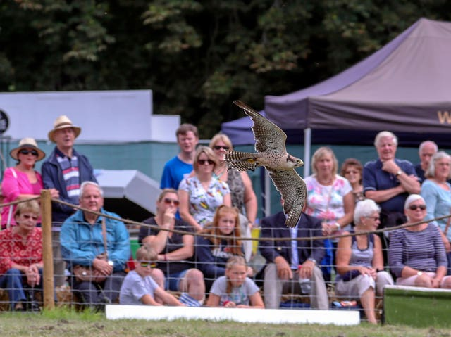 The Hawking Centre team put on a falconry display