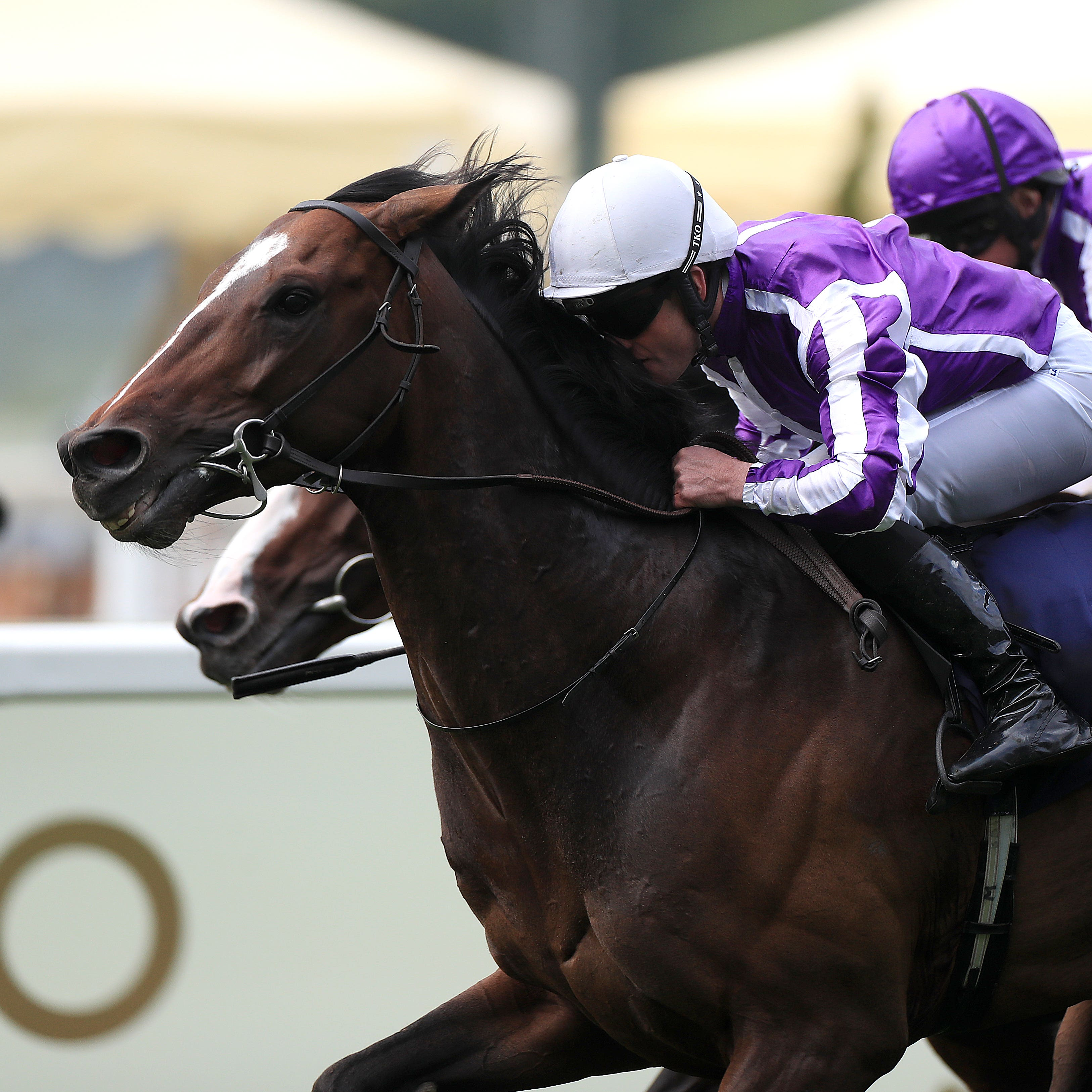South Pacific on his way to winning at Ascot